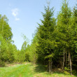 Stock Photo: Sunny spring forest
