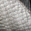 Royalty-Free Stock Photo: Fish scales background