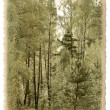 Vintage photo card. Spring forest. — Stock Photo