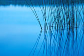 Silhouette of reeds reflected in still lake at night — Stock Photo