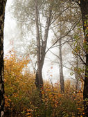 Autumn trees and fog — Stock Photo