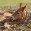 Newborn foal — Stock Photo