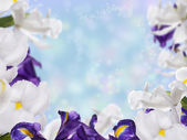 Floral Border with Iris Flower — Foto Stock