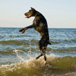 Standing dog in water — Stock Photo #2644115