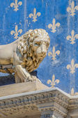 The Marzocco, the lion sculpted by Donatello, the symbol of Flor — Stock Photo