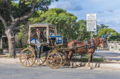 Horse-drawn Buggy in Mdina, Malta — Stock Photo