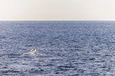 Luzzu boat on Qbajjar Bay, Gozo — Stock Photo