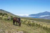 Tafi del valle lago em tucuman, argentina. — Foto Stock