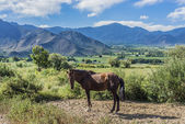 Cachi Adentro in Salta, northern Argentina — Stock Photo