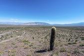 Los Cardones National Park in Salta, Argentina. — Stock Photo