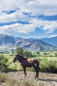 Cachi adentro en salta, norte de argentina — Foto de Stock
