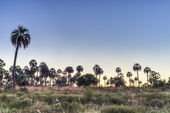 Alba su el palmar parco nazionale, argentina — Foto Stock