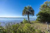 Palms on El Palmar National Park, Argentina — Stock Photo