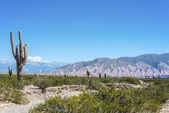 национальный парк лос cardones в городе сальта, аргентина. — Стоковое фото