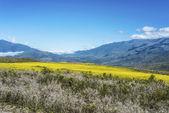 Calchaqui dolina w tucuman, argentyna — Zdjęcie stockowe