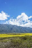 долине калчаки в тукумане, аргентина — Стоковое фото