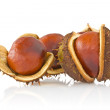 Three autumnal chestnuts — Stock Photo