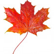 Red maple leaf as an autumn symbol — Stock Photo #13613949