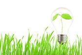 Plant growing inside the light bulb — Stock Photo