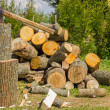 Chopping firewood - Stock Photo