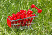 Shopping cart with red currant — Stock Photo