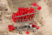 Red currant in a shopping cart — Stock Photo