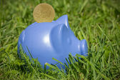 Blue piggy on the grass — Stock Photo
