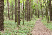 Pathway through the green forest — Stock Photo