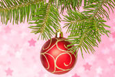 Red bauble on the fir branch — Stock Photo