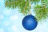 Tak van de zilverspar met een blauwe bauble — Stockfoto