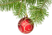 Isolated fir branch with a red bauble — Stock Photo