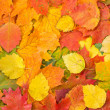Background made of fallen autumn leaves — Stock Photo