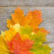 Bunch of autumnal leaves on the planks — Stock Photo