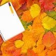 Notebook and autumnal leaves — Stock Photo