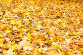Carpet of fallen autumn foliage — Stockfoto