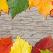 Wooden planks and colorful fall leaves — Stock Photo