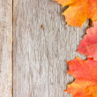 Autumnal leaves and old wooden planks — Stock Photo