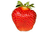 Red berry strawberry isolated  — Stock Photo