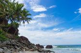 Découvre sur une plage tropicale de varkala, kerala Inde — Photo