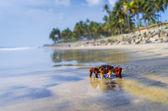 螃蟹在热带小岛上 — 图库照片