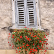 Old window with flowers — Stock Photo