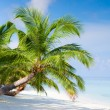 Beach on tropical island — Stock Photo #18998585