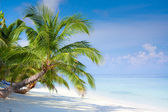 Beach on tropical island — Stockfoto