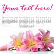 Pink lilies isolated, ready template - Stock Photo