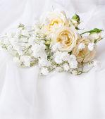 White roses on a white tulle — Stock Photo