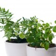 Stock Photo: Home plants with green leaves