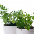 Home plants with green leaves — Stock Photo