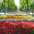 Alley of bright multi-colored tulips — Stock Photo #24869383