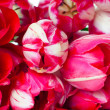 Bright spring pink tulips - Stock Photo