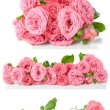Bright pink roses, collage, isolated — Stock Photo